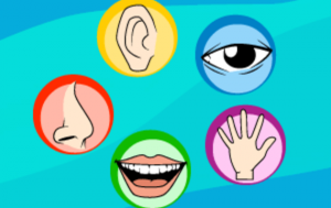 cinco-sentidos